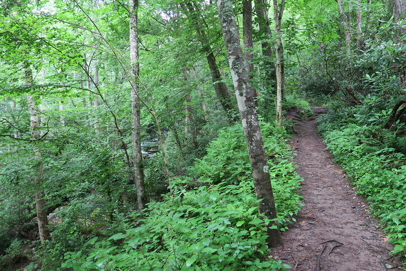 Ramsey Cascades Trail - 3,200'