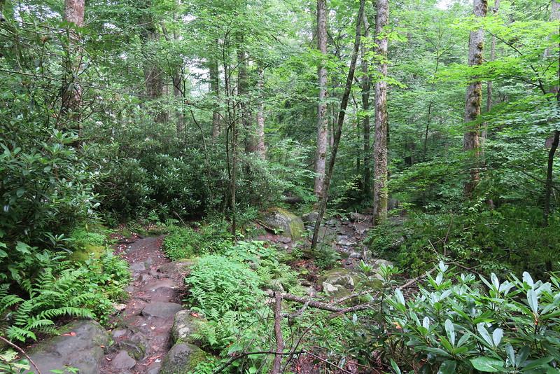 Ramsey Cascades Trail - 3,800'