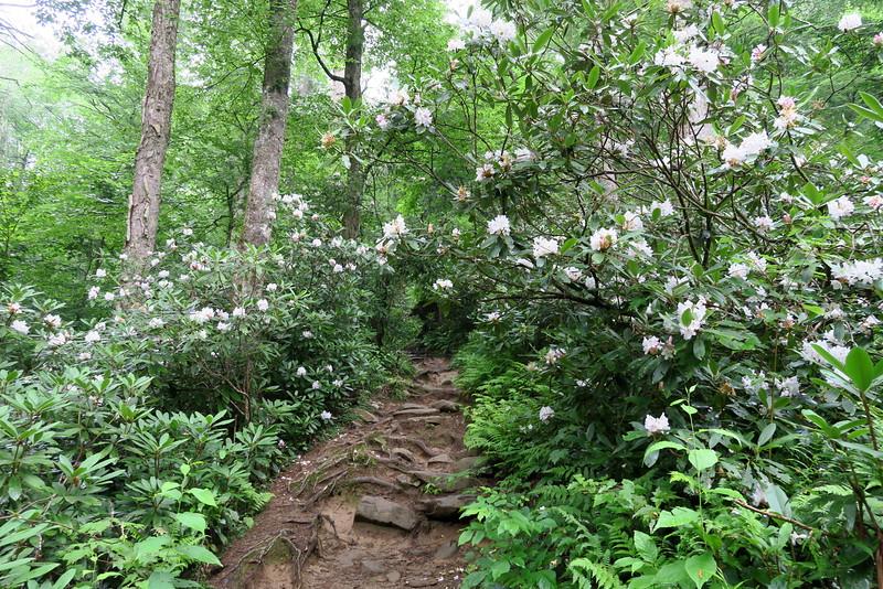 Ramsey Cascades Trail - 3,350'