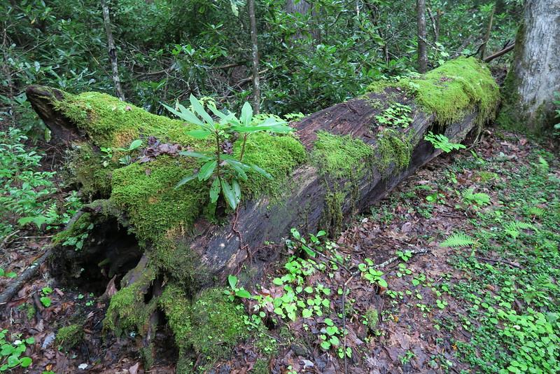Ramsey Cascades Trail - 2,940'