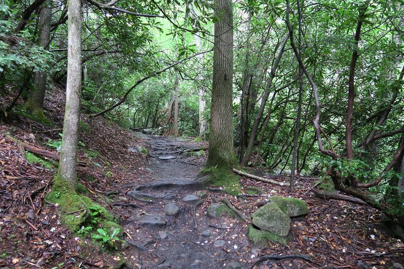 Ramsey Cascades Trail - 2,650'