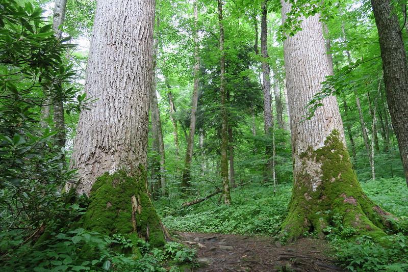 Ramsey Cascades Trail - 3,100'