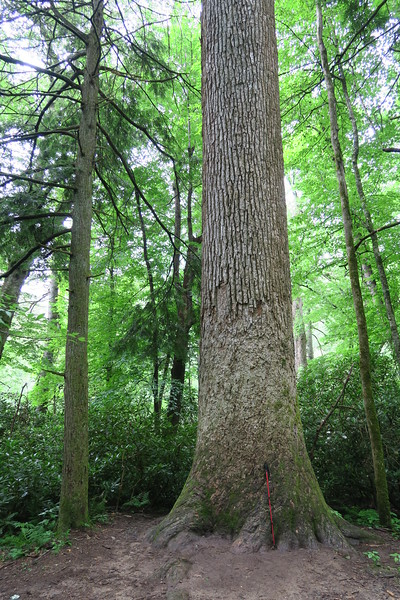 Ramsey Cascades Trail - 3,420'