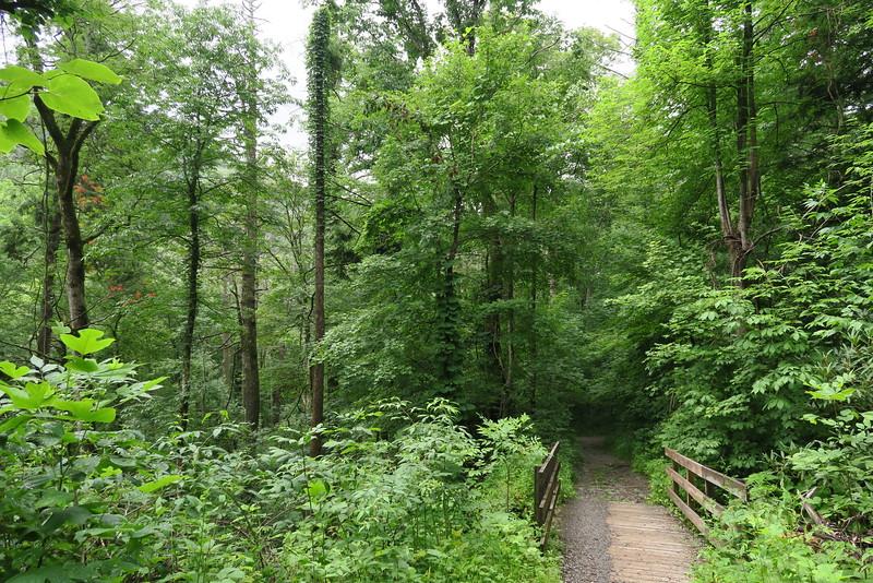 Ramsey Cascades Trail - 2,560'