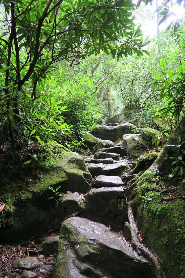 Ramsey Cascades Trail - 4,220'