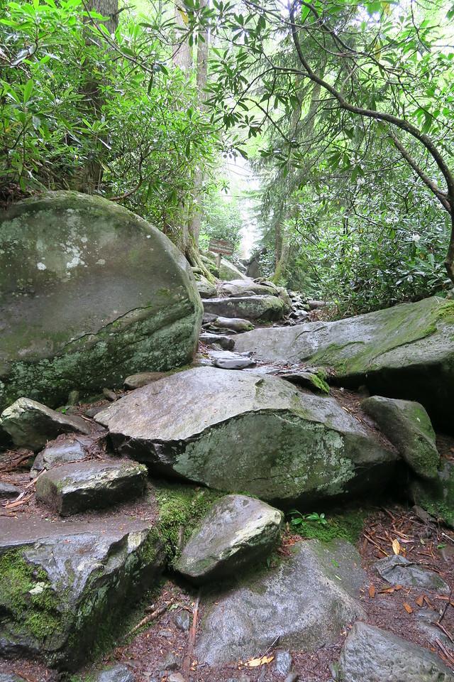 Ramsey Cascades Trail - 4,250'