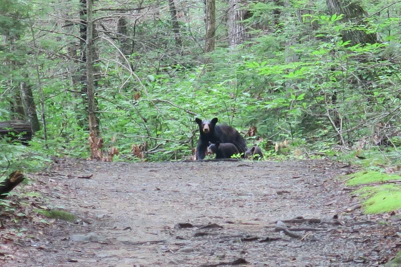 Ramsey Cascades Trail - 2,500'