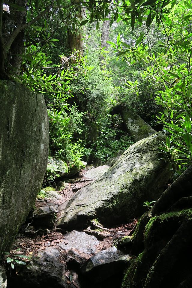 Ramsey Cascades Trail - 4,100'