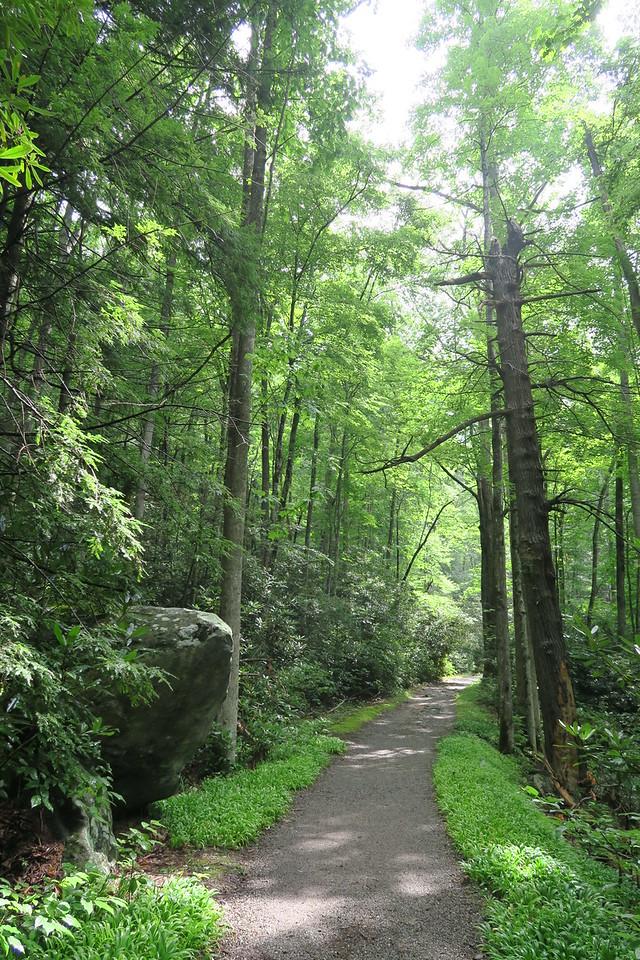 Ramsey Cascades Trail - 2,300'
