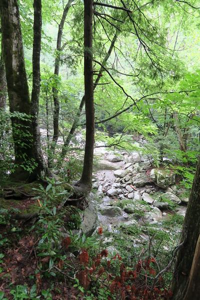Ramsey Cascades Trail - 2,600'
