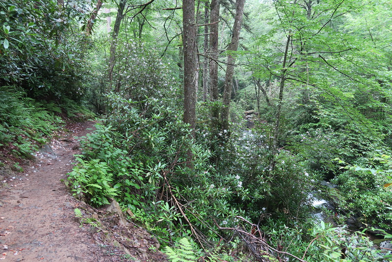 Ramsey Cascades Trail - 3,600'