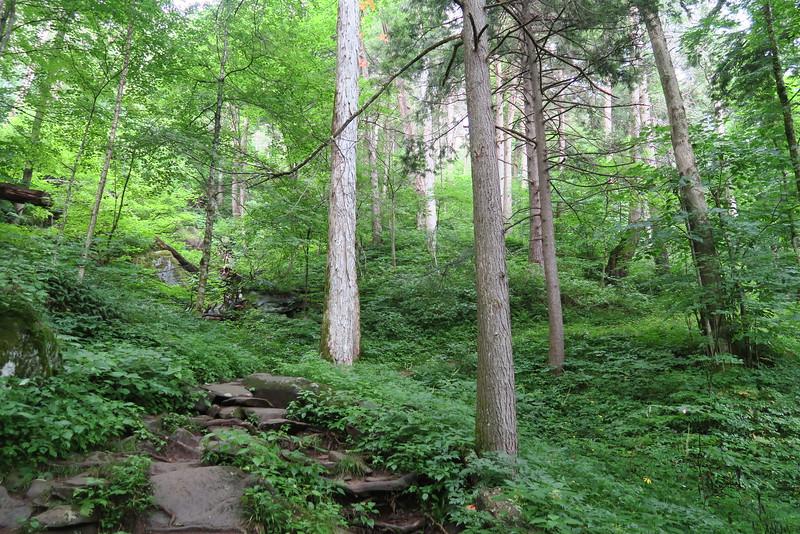 Ramsey Cascades Trail - 3,900'