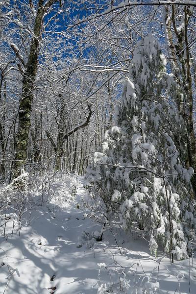 Appalachian Trail -- 3,450'