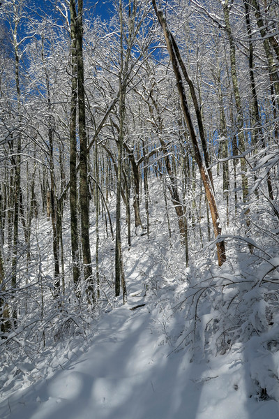 Appalachian Trail -- 3,600'