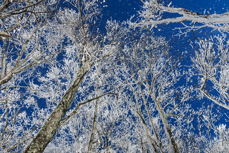 Appalachian Trail -- 3,800'