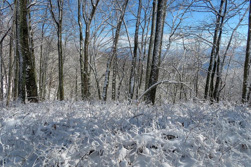 Appalachian Trail -- 3,250'