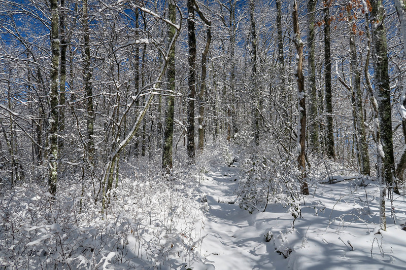 Appalachian Trail -- 3,400'