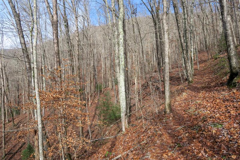 Appalachian Trail -- 2,000'