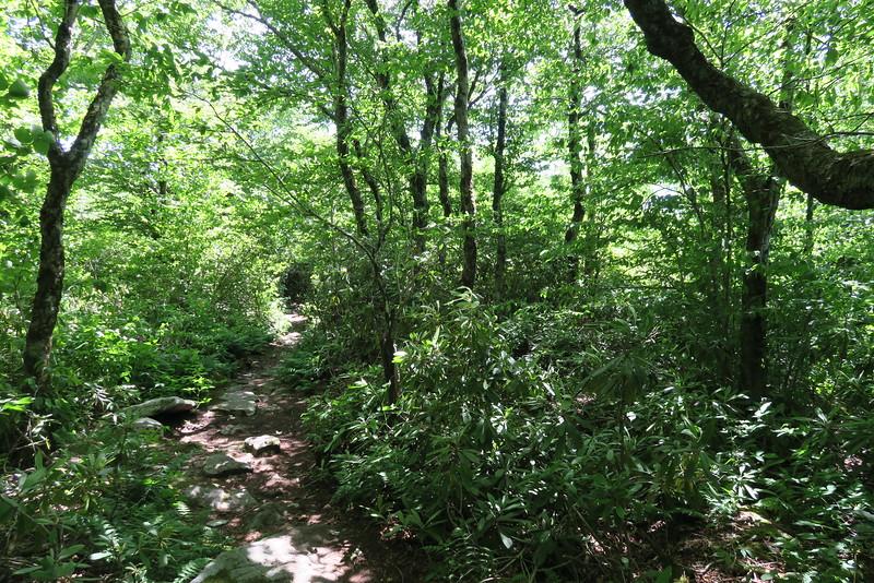 Appalachian Trail - 4,420'