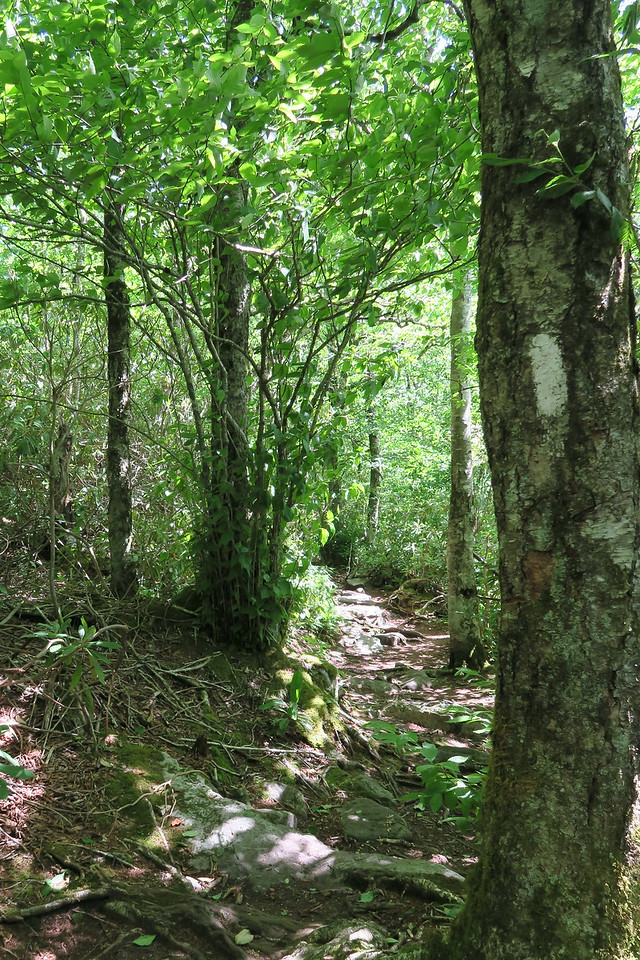 Appalachian Trail Access Path-Appalachian Trail Junction - 4,440'