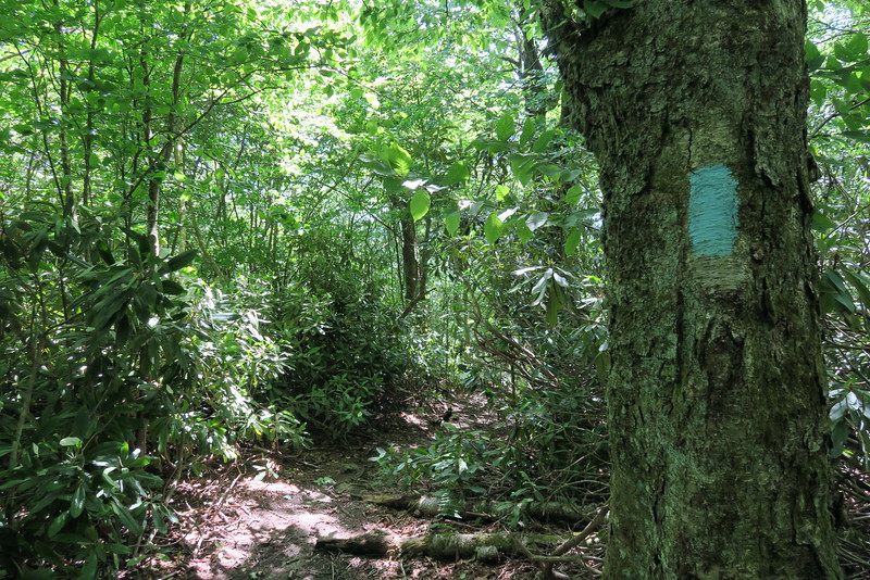 Appalachian Trail Access Path - 4,480'