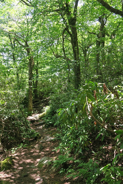 Appalachian Trail - 4,480'