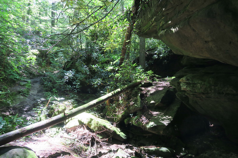Honey Creek Falls Spur Trail