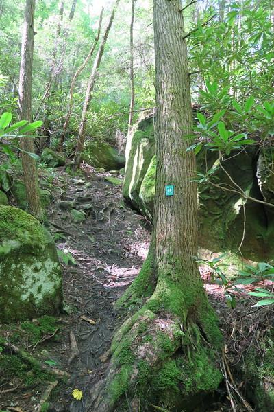 Honey Creek Loop Trail