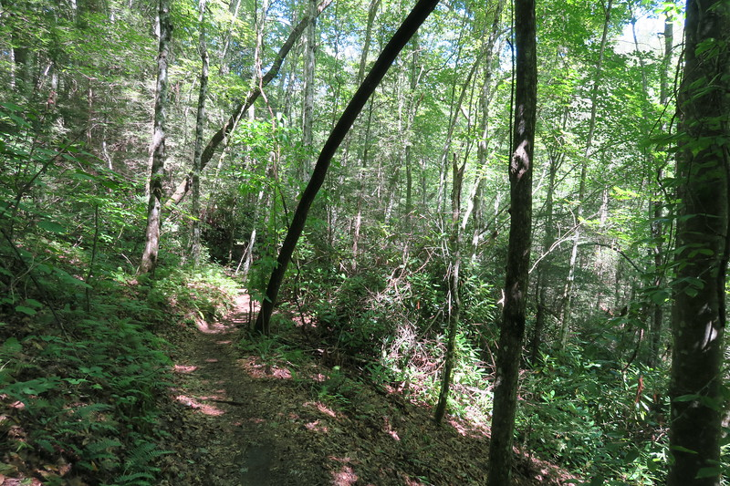 Honey Creek Loop Trail