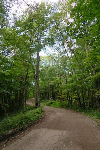 Black Mountain Ridge Road - 3,800'