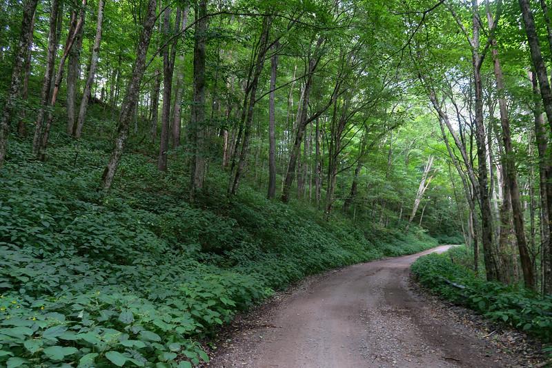 Black Mountain Ridge Road - 3,850'