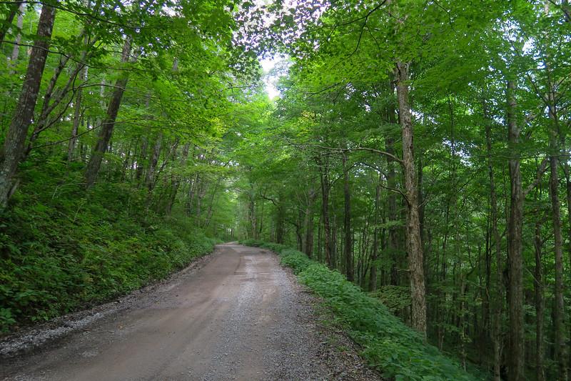 Black Mountain Ridge Road - 3,830'