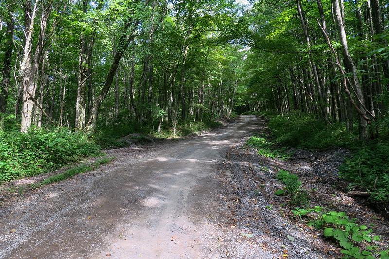 Black Mountain Ridge Road - 3,900'