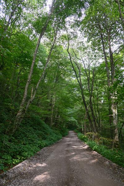 Black Mountain Ridge Road - 3,870'