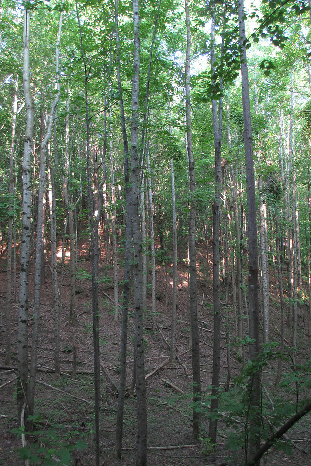 My previous experience with the state of Mississippi was over in the pancake-flat delta region on the western side of the state.  I was thoroughly enjoying this hilly, wooded section of the state I hardly realized existed...