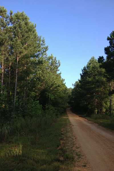 Woodall Mountain Road as it begins its climb through the pines to the top...