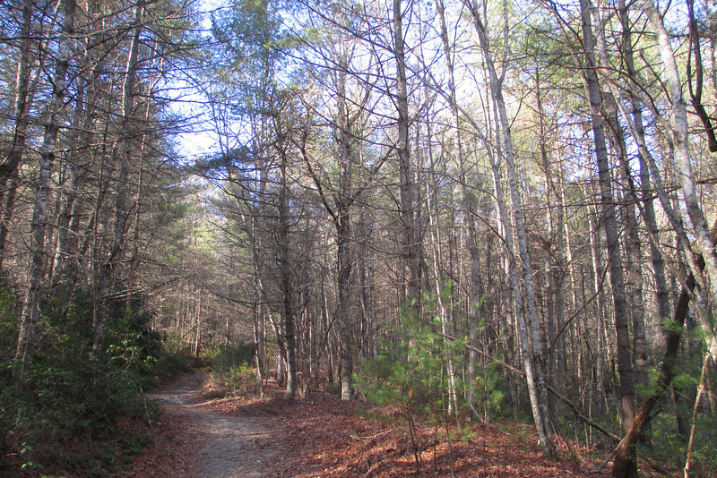 The Corn Mill Shoals Trail climbs steadily from the Little River Trail...