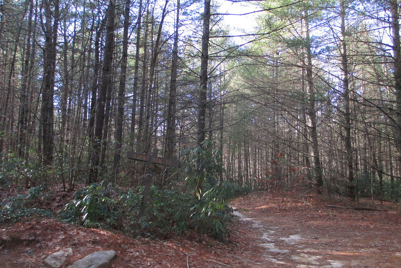 Not far after rejoining the Corn Mill Shoals Trail, the Burnt Mountain Trail broke off to the left...