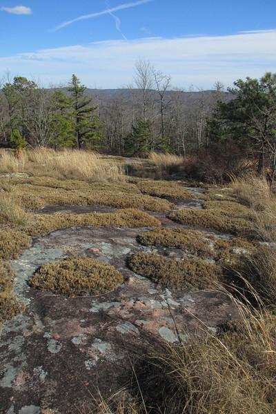 Cedar Rock Trail