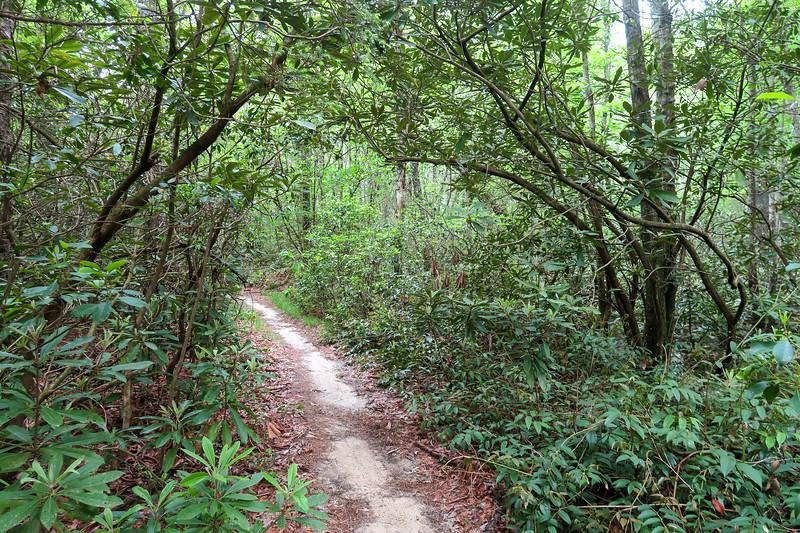 Briery Fork Trail -- 2,660'