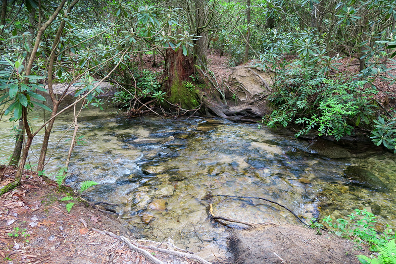 Briery Fork Trail @ Briery Fork Creek (upper crossing) -- 2,650'
