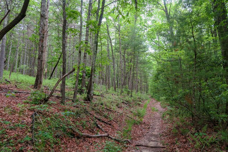 Briery Fork Trail -- 2,700'