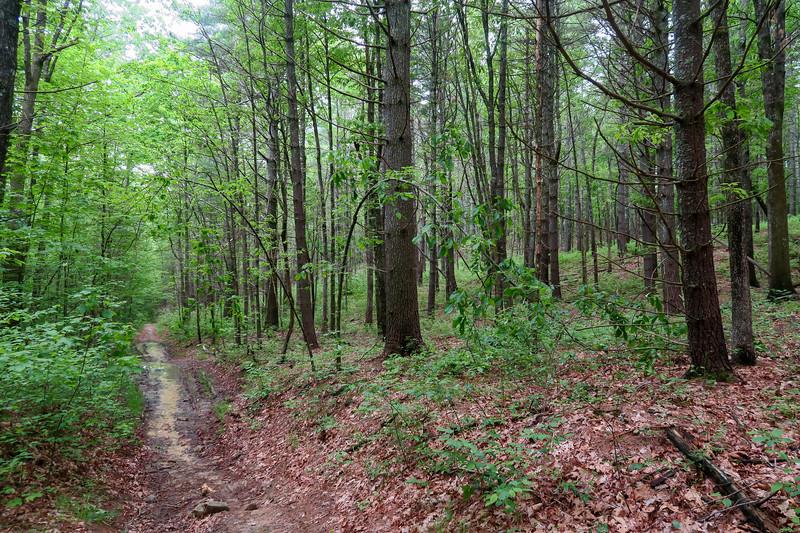 Briery Fork Trail -- 2,750'
