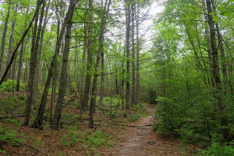 Briery Fork Trail -- 2,670'