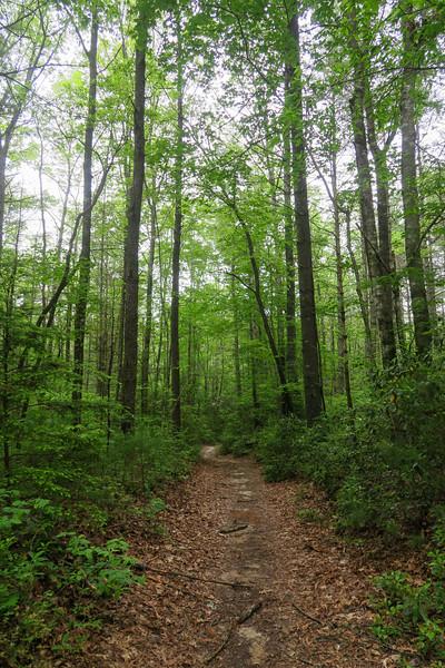 Briery Fork Trail -- 2,680'