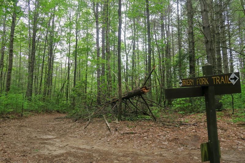 Turkey Knob Road/Briery Fork Trail Junction -- 2,700'