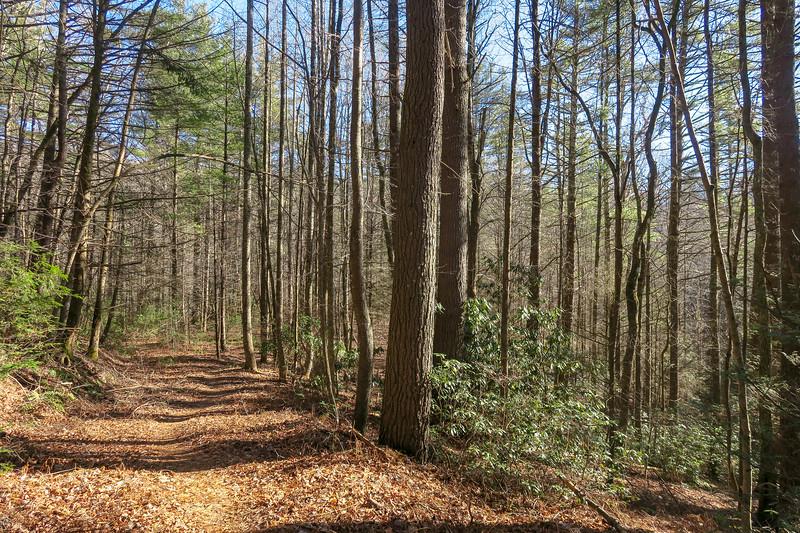 Nooks Trail -- 2,710'