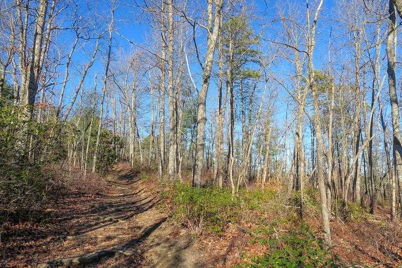 Cedar Rock Trail -- 2,980'