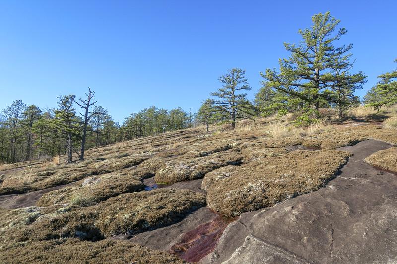 Cedar Rock Trail -- 2,840'