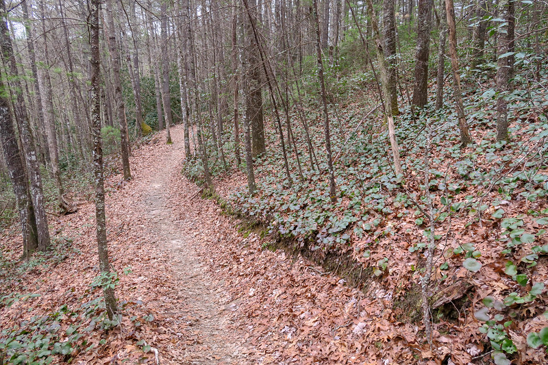 Grassy Creek Trail -- 2,620'